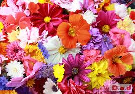 Lola flowers boutique