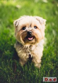 Bramblewood Canine Richmond